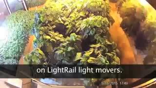 Urban Farm w/ LightRail = 45 Day Peppers!