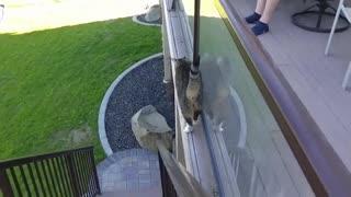 Funny cat practicing moonwalk