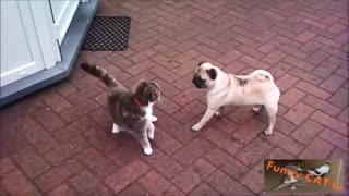 Cats and Dogs Meet For The First Time