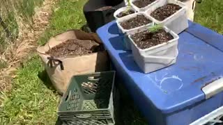 Cannabis & Marijuana Grow Michigan