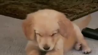 Puppy adorable plays with ice cube