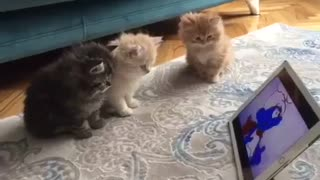 cute cats using a tablet