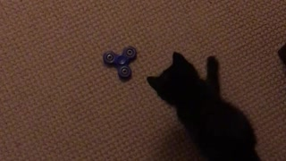 Curious kitten loves to play with fidget spinner