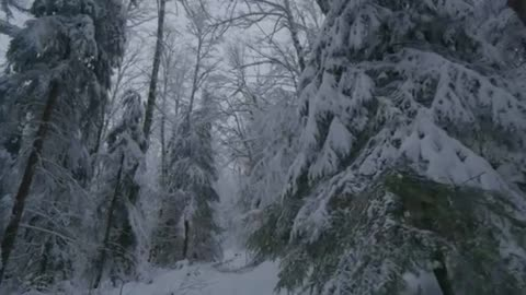 Walking in the snow in a forest