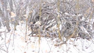 Return to Sasquatch Winter Structures
