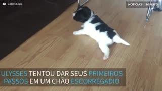 Cãozinho filhote tenta ficar em pé em chão escorregadio