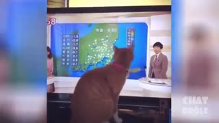 cute cats funny movement