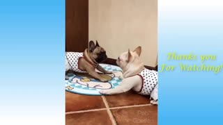 Funny cat video, Cute Pets And Funny Animals Compilation