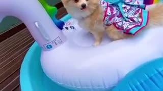 The princess dog