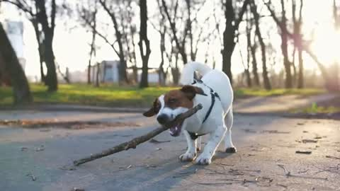 Top 10 Hyperactive Dog breeds in the world