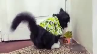Cats getting scarred by cucumbers!😱😱😹😹😹