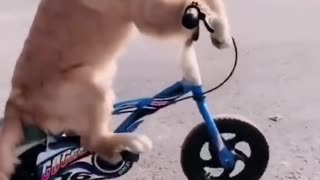dog riding a bicycle ( very funny)