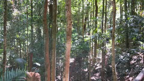 Forest Bird Song