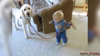 Bebes paseando perros