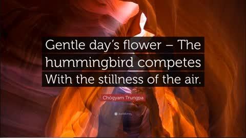 Soul of the Everyman - Hummingbird!