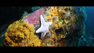 Underwater experience and scuba diving,best nature and forest discoveries