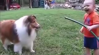 Try Do Not To Laugh.Funny Dog And Cat Videos