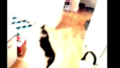 The cat escapes with a balloon