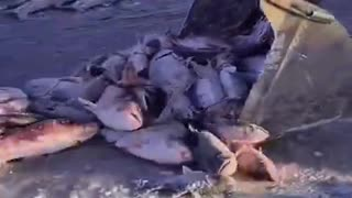 Funny outdoor Fishing