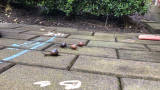 A Snail Race over Time-Lapse