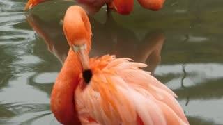 Strange bird flamingo