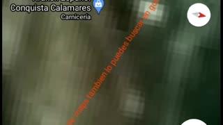 video de un pulpo gigante que aparece en google maps
