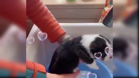 Dog viral video viral