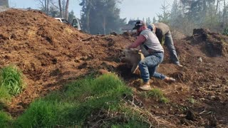 Saving Pigs from a Bush Fire