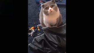Cute Funny Cats Compilation