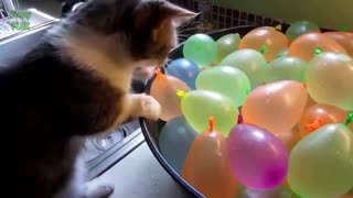 Funny Cats Chasing Balloons