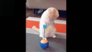 pets cuteness overload
