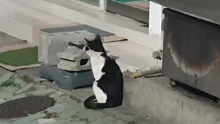 It's a wild black cat, isn't it cute?
