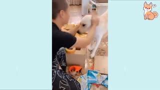 Amazing dogs acting like humans