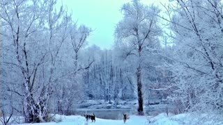 Siberia 17/1/2021 with my dogs