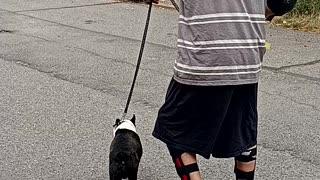 Walking dog on skates