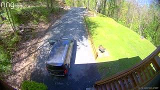 Bear Breaks Into Minivan to Finish off Frappé