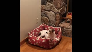 Jack Russell gets super excited for champagne pop