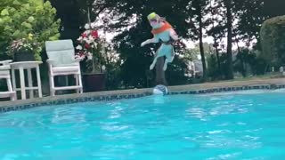 Athletic dog jumps into pool while catching tennis ball in mid air