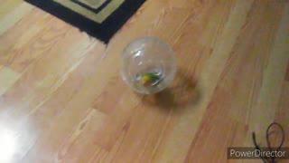 Funny birb video