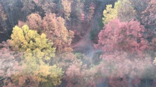 Above the trees in Gatlinburg