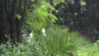 Calm rain sounds to relax, meditate or sleep