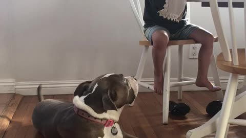 Little boy baby talking his dog