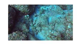 Dive day at Papa Bay Hawaii!