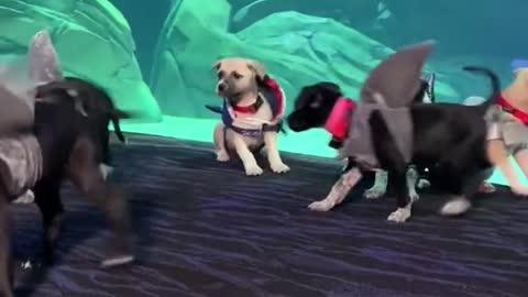 Puppies at the Georgia Aquarium