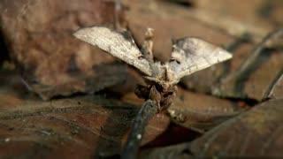 Monster Bug Wars: Mantis, Crab, Spider