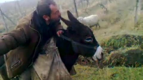 The man opens the donkey in love and kisses it