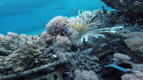 Coral reefs and water plants in the Red Sea, Eilat Israel