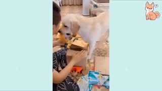 dog helps man with taping boxes