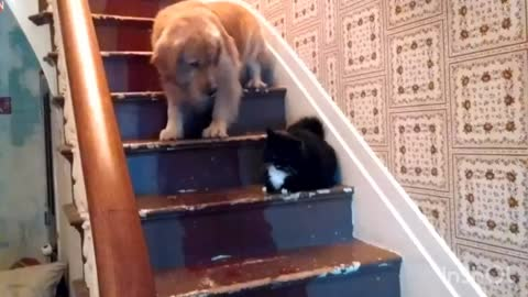 The dog is afraid to go down the stairs. That's all... Cat's
