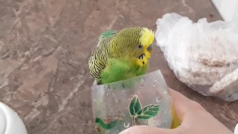 Swimming in a glass is much more interesting